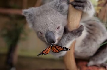 video opțiuni fluture panda face bani online