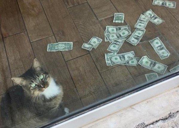 cum să faci bani într- o pisică